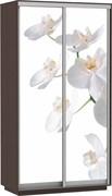 Орхидея  Дуо